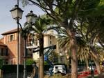 potatura palme passeggiata ciccione