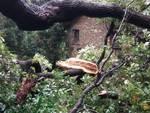 villa pallavicini danni allerta