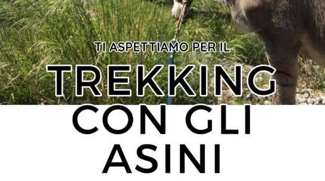 Trekking con gli asini Parco Natura AsinOlla