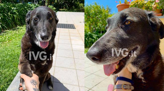 Cagnolina smarrita a Loano, l'appello dei proprietari - IVG.it