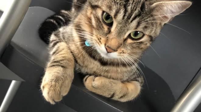 Gattino Miele smarrito