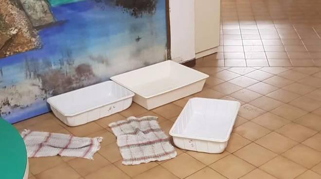 mimosa infiltrazioni asilo scuola materna