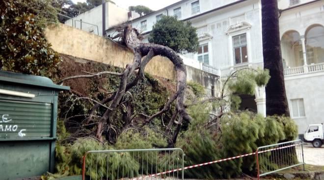 San Fruttuoso, albero caduto e danni a Villa Imperiale