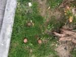Bocconi avvelenati cani Andora