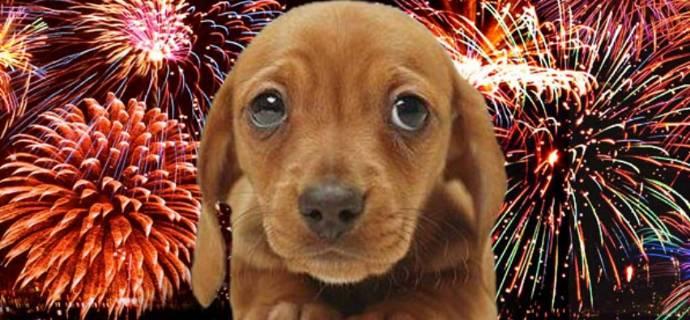 Cane fuochi d'artificio artificiali