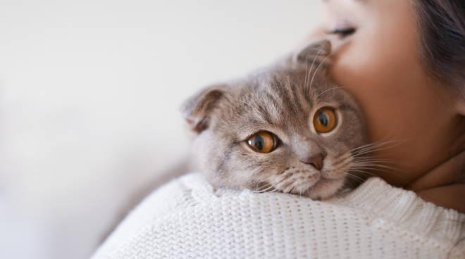 Gatti: istruzioni per l'uso