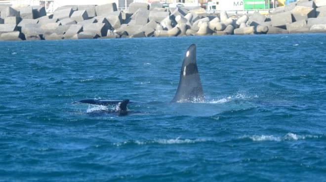 Foto nuove Orche Acquario