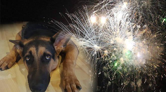 fuochi artificiali paura cani animali