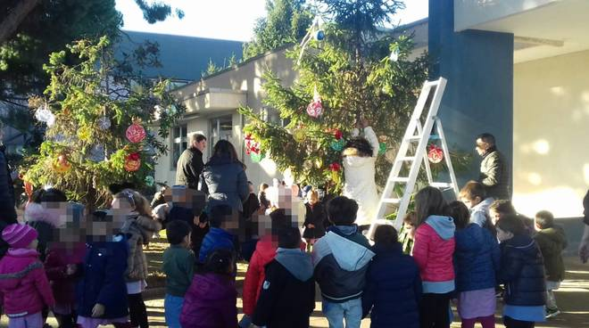 Albero Scuola Vadino Albenga