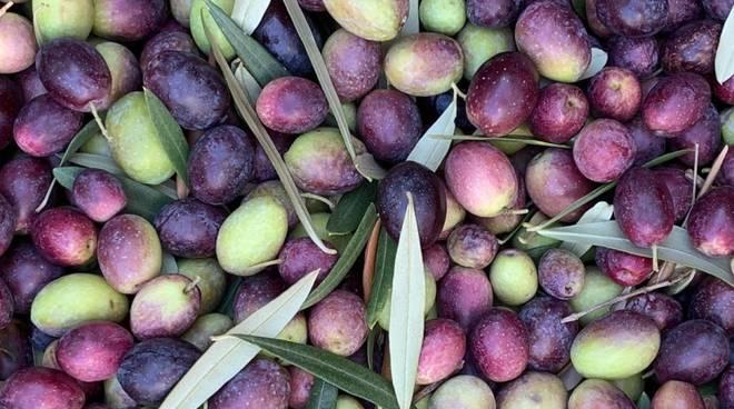 corso assaggiatore olio ranzi - olive