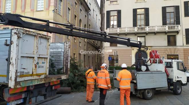 taglio albero di natale