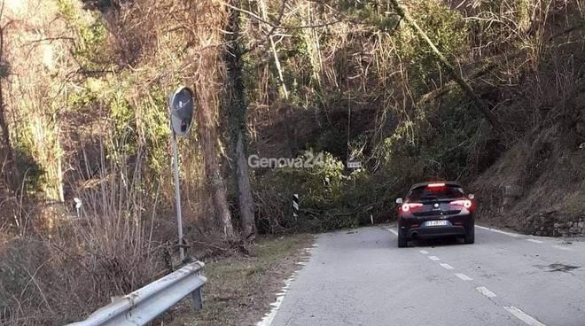 albero sulla strada 586