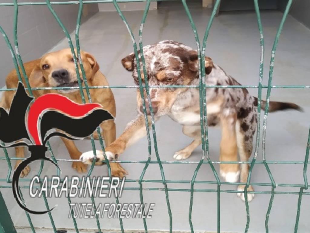 cani montebruno