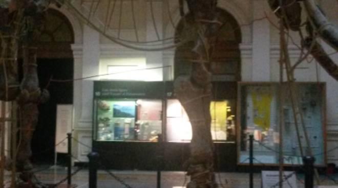 Dinosaur night - Notte al Museo