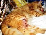 Gatto ferito generica Enpa
