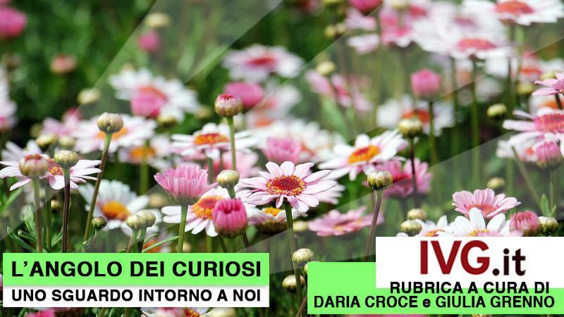 Angolo Curiosi 21 febbraio