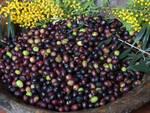 liguria eccellenze pesto olive pesto