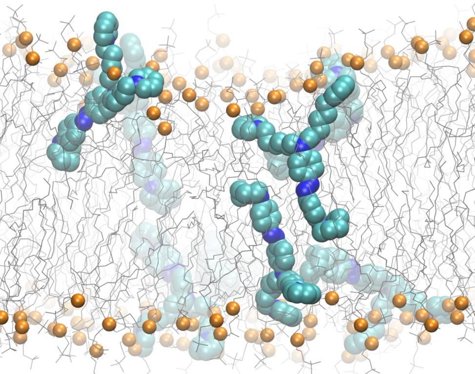 Nuova molecola studio cervello iit