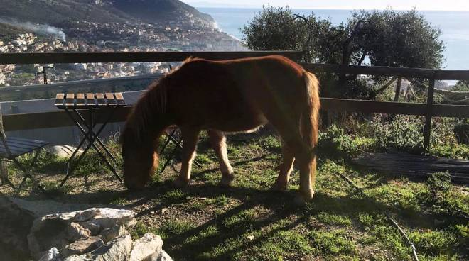Parco Natura Asinolla Pietra Ligure asino e panorama