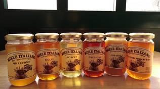 apicoltura gaino miele