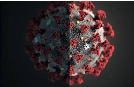 Coronavirus generica