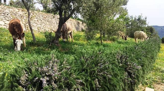 asinolla parco pietra ligure