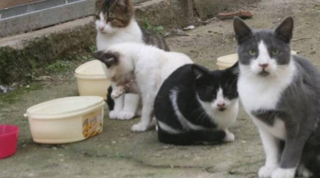 gatti generica
