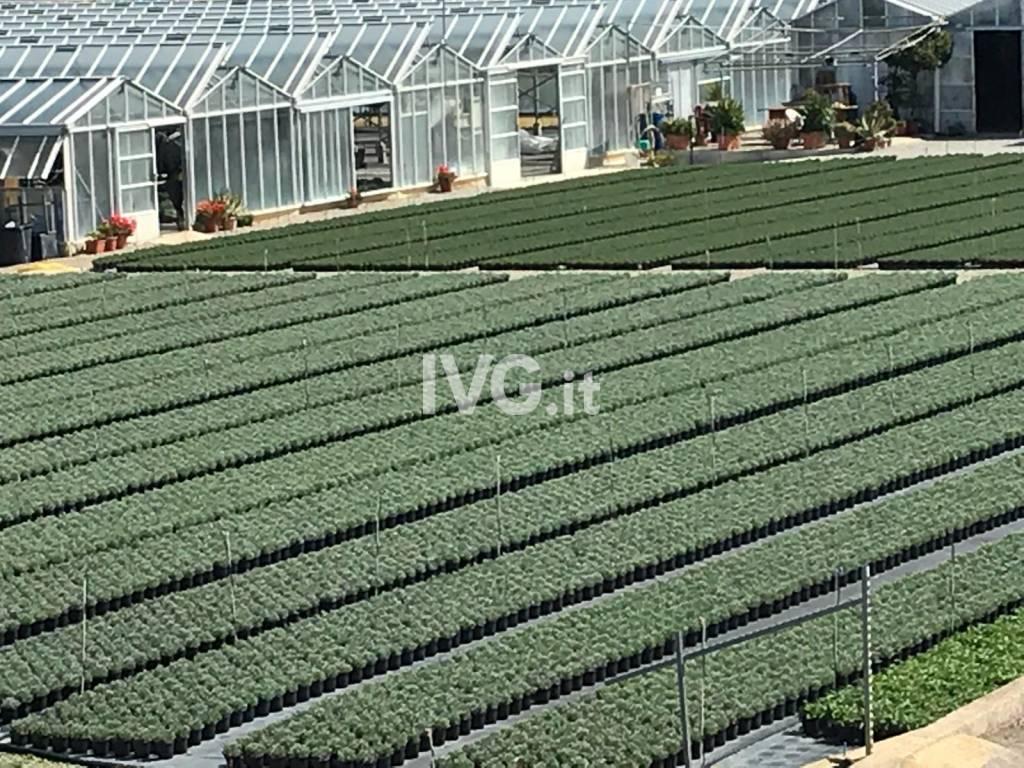 Serre agricoltura generica
