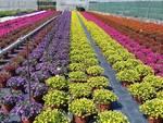 settore florovivaistico