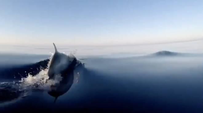 delfini generica