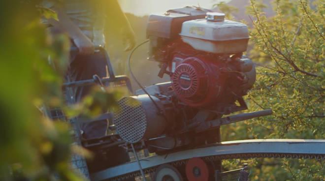 agricoltura coltivazione generica