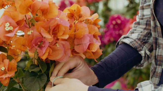 fiori floricoltura generico