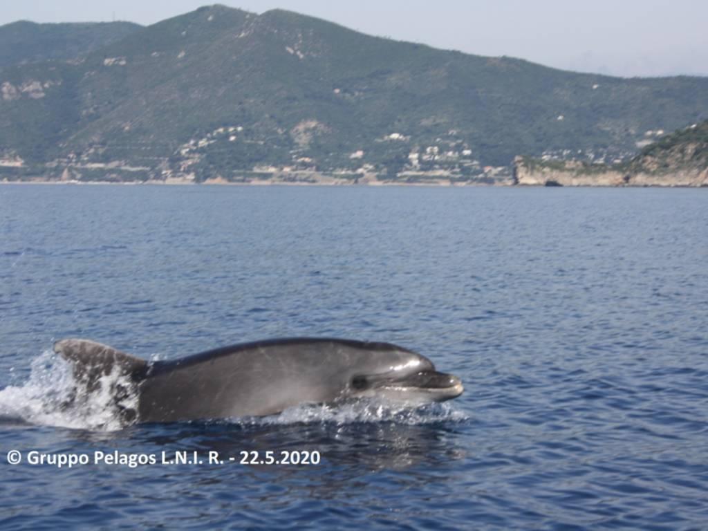 Tursiopi delfini finale ligure