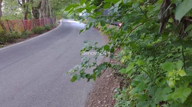 Via Carso vegetazione su strada