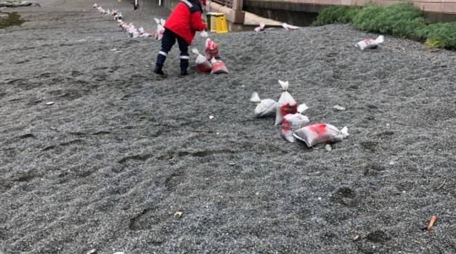 sacchetti plastica mareggiata
