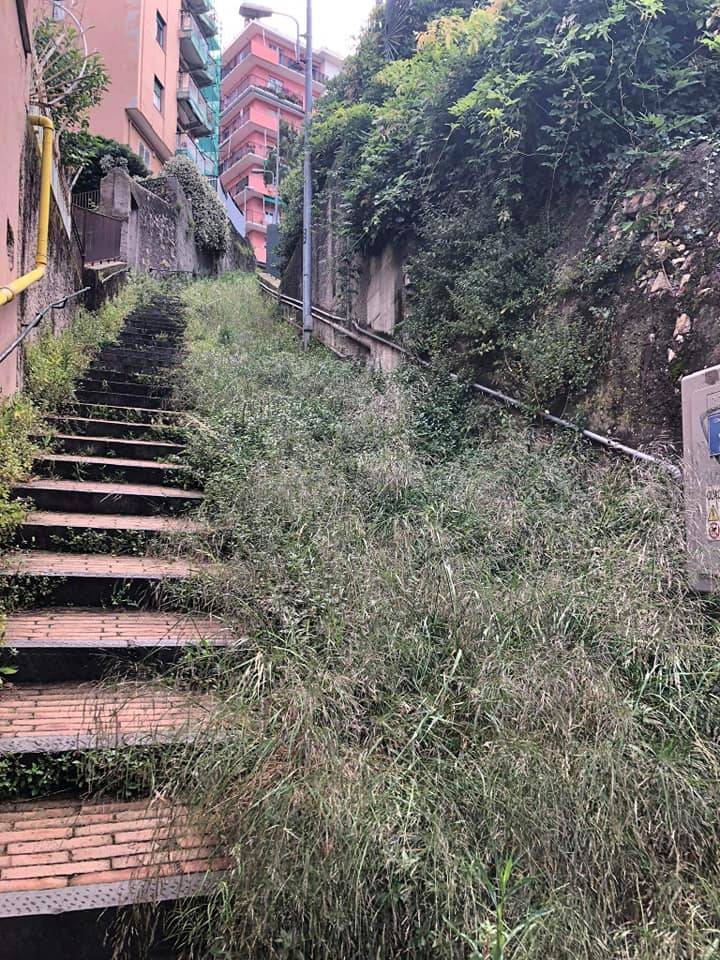 Sfalcio mancante, erbacce in tutta Genova