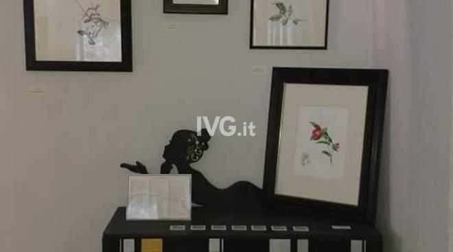 Mostra di Illustrazioni Botaniche ad Acquerello di Milena Vanoli