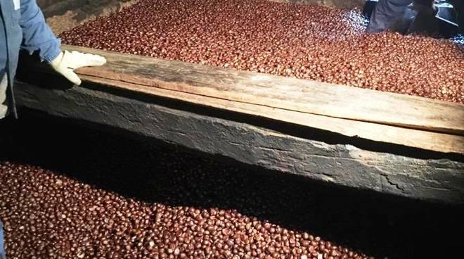 castagne coltivatori