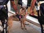 maqui cane antidroga polizia locale