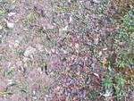 Meteo, dopo le grandinate in Liguria si contano i danni all'agricoltura