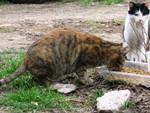 Savona ENPA colonie feline
