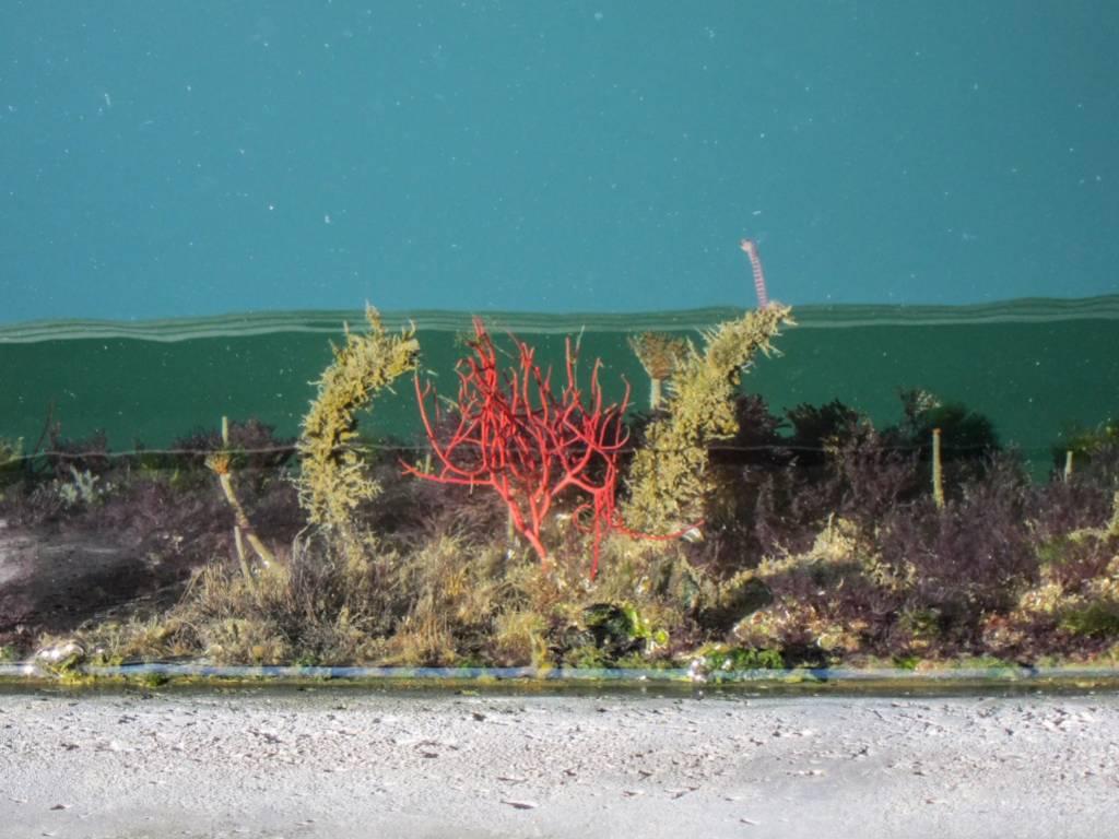 alghe e organismi sottomarini