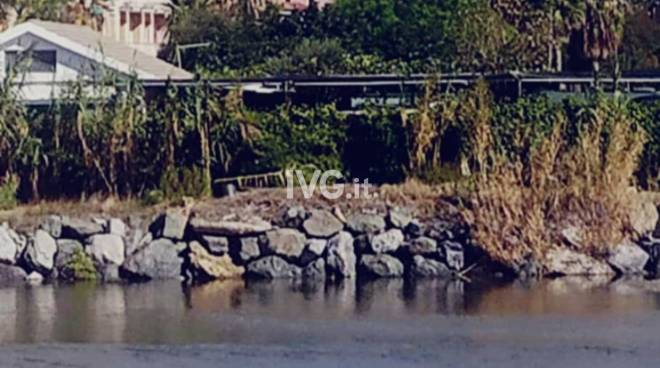 Avvistamento di un fenicottero tra Vado Ligure e Savona