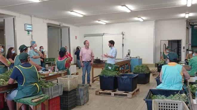 Casella Sansa agricoltura regionali
