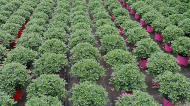 Niero Agricoltura