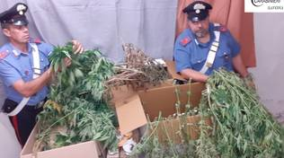 sequestro marijuana carabinieri