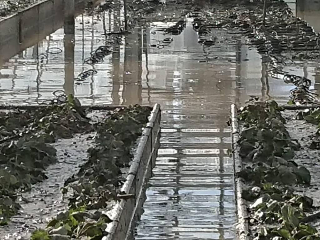 allerta danni agricoltura