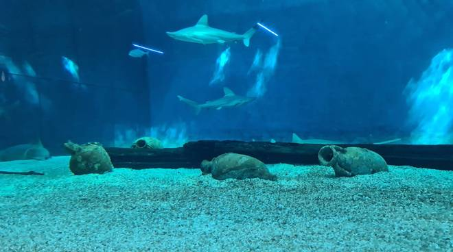 Anfore romane acquario