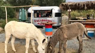 """Pietra Ligure asini """"vagabondo"""" Parco Natura AsinOlla"""