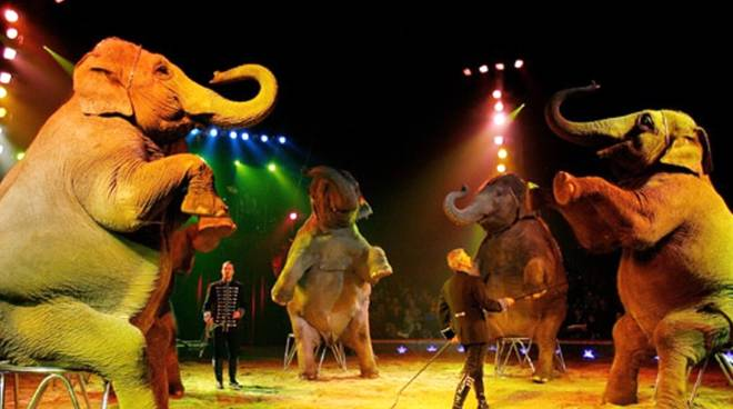Circo Millennium elefanti